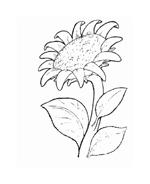 Fiore da colorare 49