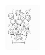 Fiore da colorare 51