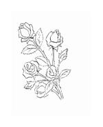 Fiore da colorare 57