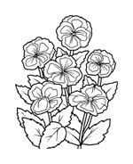 Fiore da colorare 61