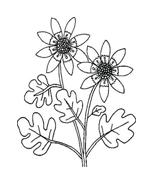 Fiore da colorare 68