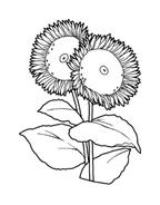 Fiore da colorare 69