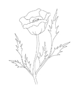 Fiore da colorare 87