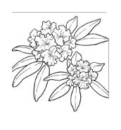 Fiore da colorare 89