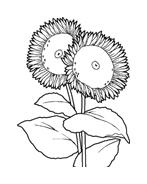 Fiore da colorare 96