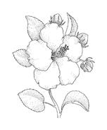 Fiore da colorare 99