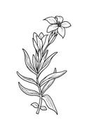 Fiore da colorare 102