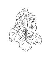 Fiore da colorare 103