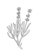 Fiore da colorare 104