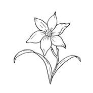 Fiore da colorare 108