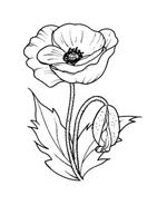 Fiore da colorare 109