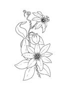 Fiore da colorare 110