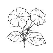 Fiore da colorare 111