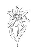 Fiore da colorare 112