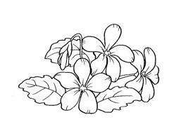 Fiore da colorare 113