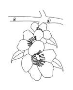 Fiore da colorare 114