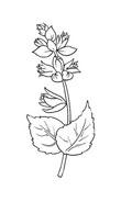 Fiore da colorare 119