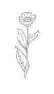 Fiore da colorare 126