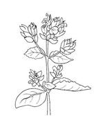 Fiore da colorare 129