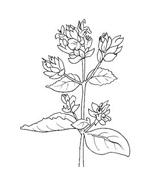 Fiore da colorare 130