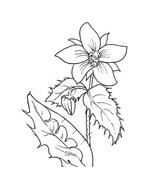 Fiore da colorare 132