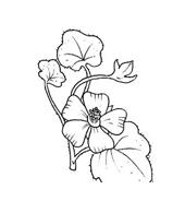 Fiore da colorare 133