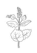 Fiore da colorare 134