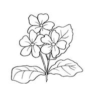 Fiore da colorare 136