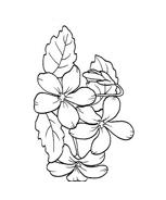 Fiore da colorare 138