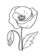 Fiore da colorare 141