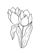 Fiore da colorare 143