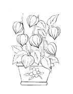 Fiore da colorare 146