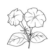Fiore da colorare 147