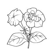 Fiore da colorare 148