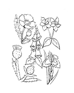 Fiore da colorare 151