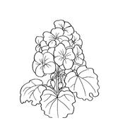 Fiore da colorare 152