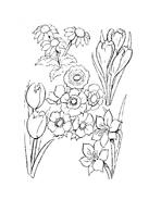 Fiore da colorare 154