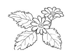 Fiore da colorare 156