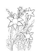 Fiore da colorare 158