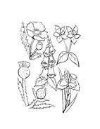Fiore da colorare 159