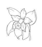 Fiore da colorare 161