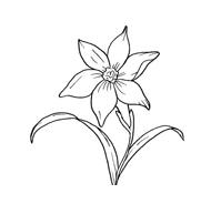 Fiore da colorare 167
