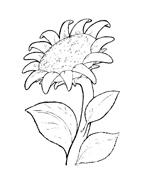 Fiore da colorare 168