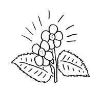 Fiore da colorare 170