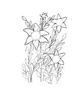 Fiore da colorare 177