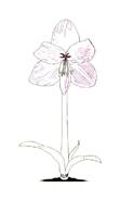 Fiore da colorare 181
