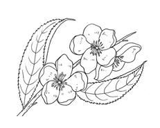 Fiore da colorare 183
