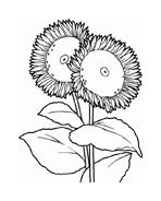 Fiore da colorare 184