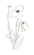 Fiore da colorare 187