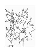 Fiore da colorare 189